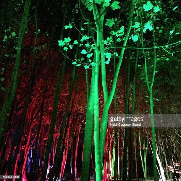sensory colors - heidi coppock beard stock-fotos und bilder