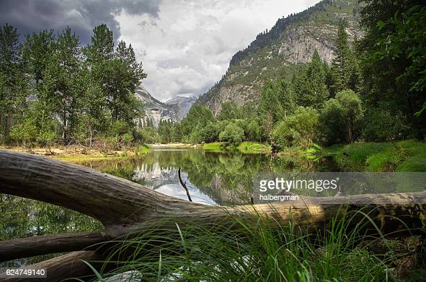 sentinel beach, yosemite valley - fallen tree stock pictures, royalty-free photos & images