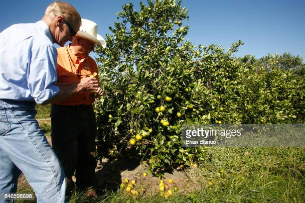 Sentor Bill Nelson left speaks with Vic Story as he tours the Story Grove orange grove where large numbers of oranges sit on the ground in the wake...