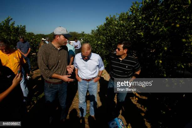 Sentors Bill Nelson center and Marco Rubio right tour the Story Grove orange grove where large numbers of oranges sit on the ground in the wake of...
