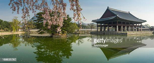 Seoul spring blossom over Gyeongbokgung pavillion reflecting lake panorama Korea