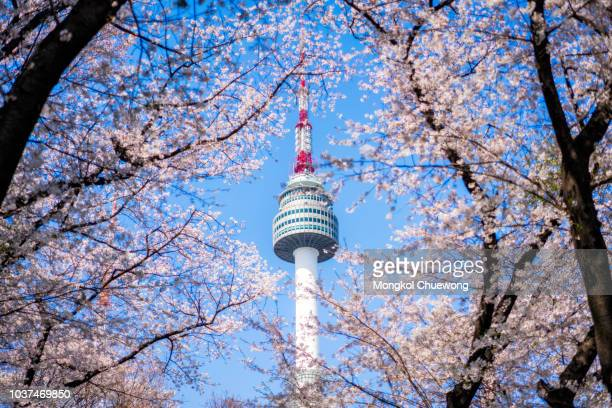 n seoul tower with cherry blossom or sakura flower with blue sky at namsan mountain in seoul city, south korea. - seoul stock pictures, royalty-free photos & images