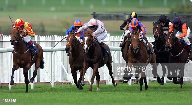 Pat Eddery on Bathwick leads the field up the hill at Sandown Park to go on and win The Sandown Futurity Conditions Stakes run over 1 Mile Mandatory...