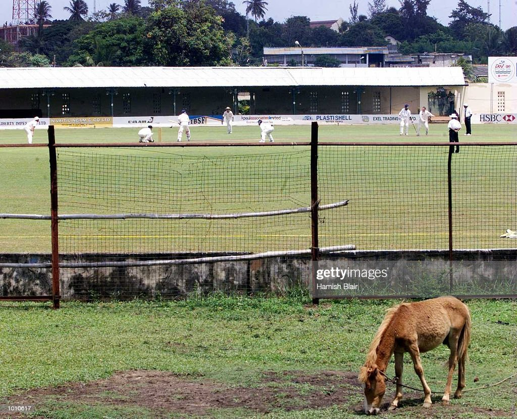 A local horse is more interested in eating than watching the cricket, during day two of the tour match between the Sri Lanka Board XI and Australia at Saravanamuttu Stadium, Colombo, Sri Lanka. Mandatory Credit: Hamish Blair/ALLSPORT