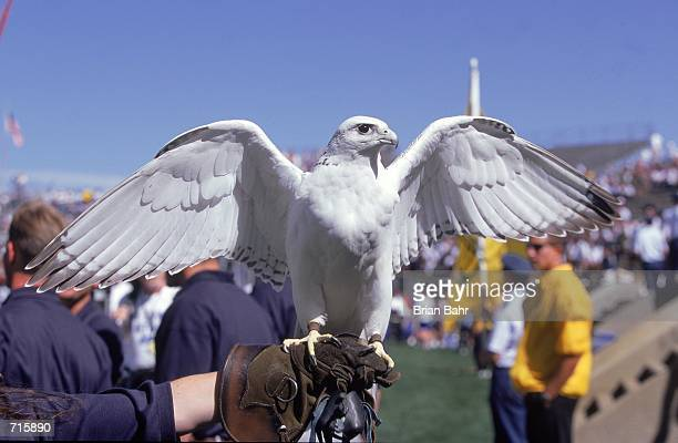 A view of the Air Force Academy Falcons mascot before the game against the Brigham Young University Cougars at the Falcon Stadium in Colorado Springs...