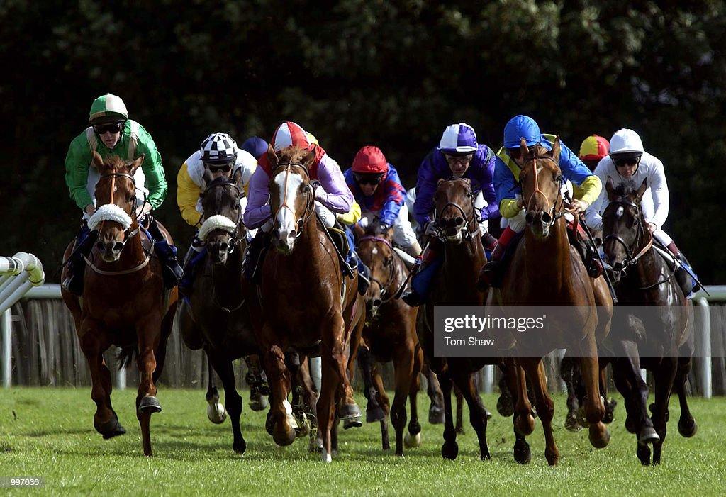 Kempton Races X : News Photo