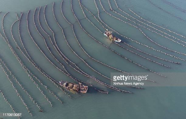 DALIAN Sept 23 2019 Aerial photo taken on Sept 23 2019 shows fishermen harvesting oysters on the sea of the Guanglu Island in Changhai County of...