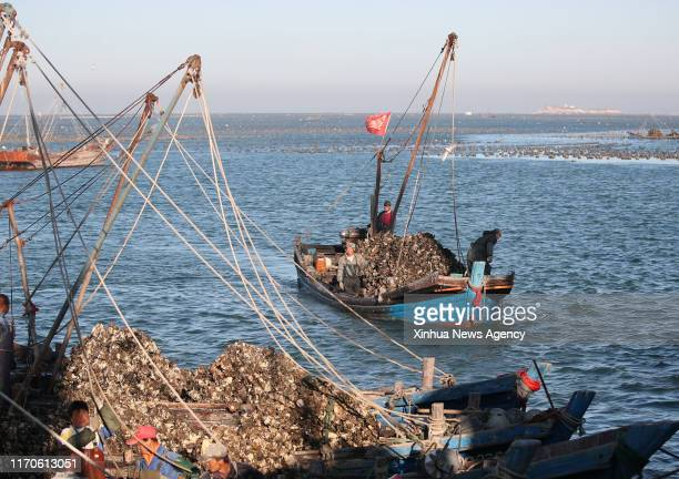 DALIAN Sept 23 2019 Ships loaded with oysters return to the dock on the sea of the Guanglu Island in Changhai County of Dalian northeast China's...