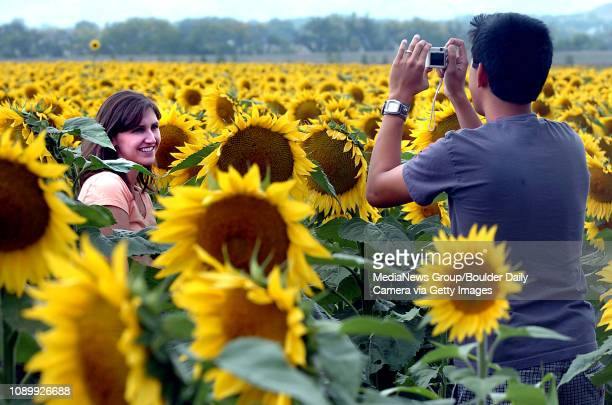 September 11 2006/ Longmont/ Gabe Encarnacion right takes a picture of his wife Allie Encarnacion in the middle of a Sunflower field in Longmont...