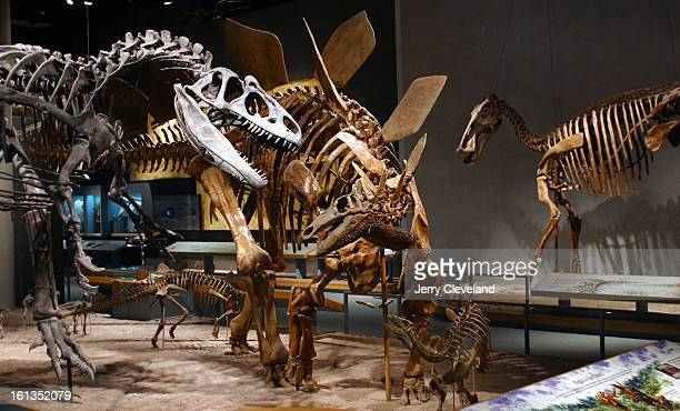 DENVER COLO September 17 2003 Allosaurus fragillis <cq> left and Stegosaurus stenops <cq> center appear to battle as other dinosaurs look on in the...