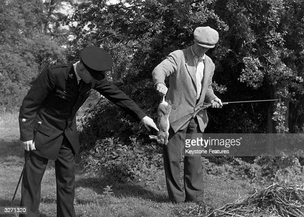 Inspector Archer of the RSPCA examines the body of a shot rabbit held by patrol member Fred ConnThe shoot was necessary to eliminate the rabbits...
