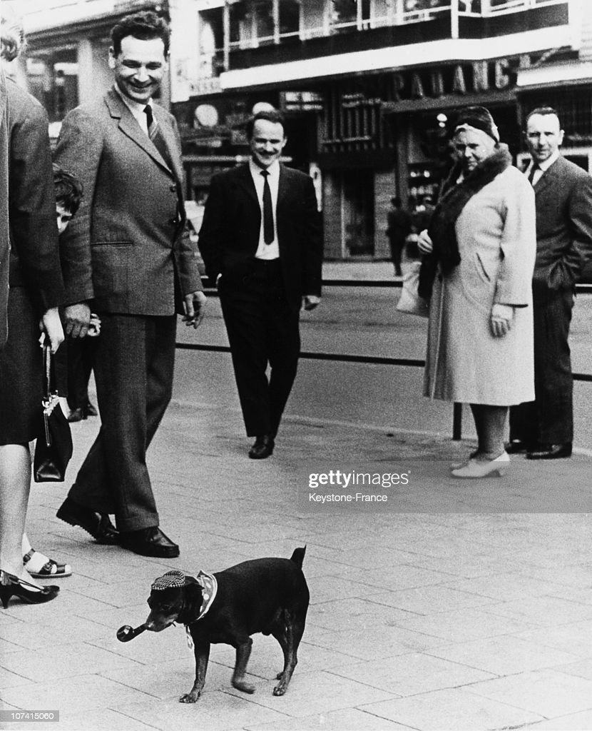 September 1959, Brussels, Dog Smoking From His Pipe
