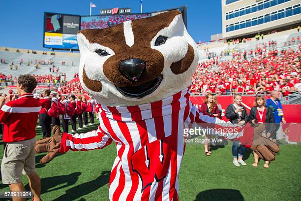 Wisconsin Badger mascot Bucky Badger celebrates after the Wisconsin Badgers defeated the Bowling Green Falcons at Camp Randall Stadium in Madison WI