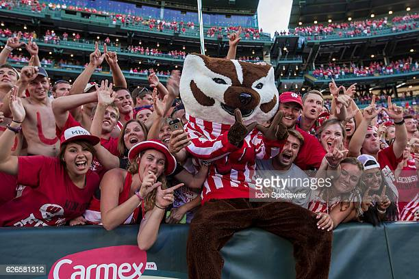 Wisconsin Badger mascot Bucky Badger does a Lambeau Leap and flashes the motion W with the fans after the Wisconsin Badgers defeat the 5th ranked LSU...
