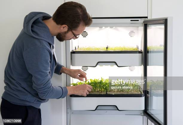 Maximilian Lössl founder of Agrilution stands in a kitchen next to plants growing in a cupboard system under LED lamps The garden system will enable...