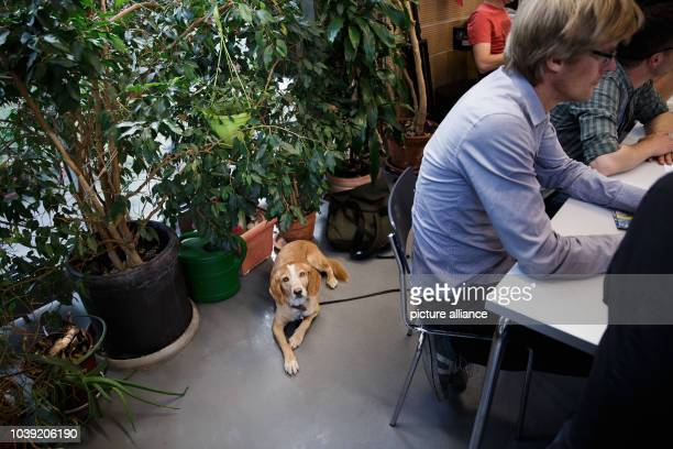 September 2018, Berlin: A dog lies in front of the green plants in the conference room during the morning conference of the editorial offices of the...