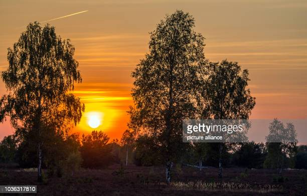 Sunset in the nature reserve of the Reicherskreuzer Heide near Pinnow between Lieberose and Guben Decades of use as a military training area have...