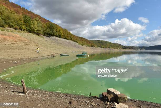 Poisonous green as a result of contamination by bluegreen algae plague is the water of the almost empty Edersee Photo Uwe Zucchi/dpa