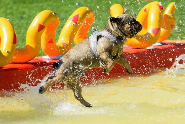 DEU: Augsburg Dog Bath Day