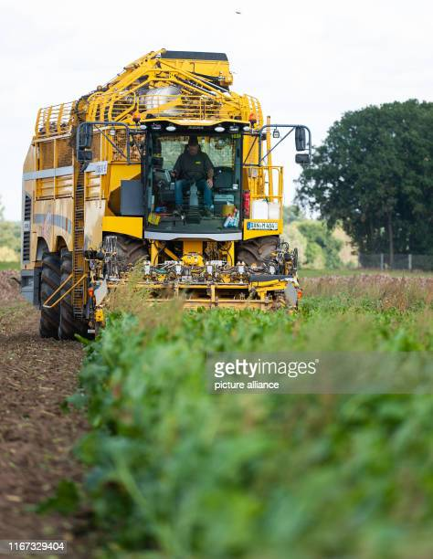 A beet harvester harvests sugar beets on a field The start of beet delivery at the four Nordzucker sites in Lower Saxony is expected this week...