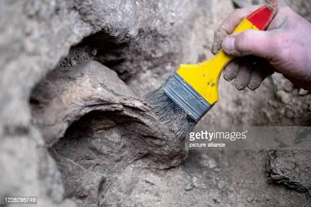 September 2020, Lower Saxony, Scharzfeld: A volunteer speleologist, he uncovers a surface during excavations at the Unicorn Cave to study the...