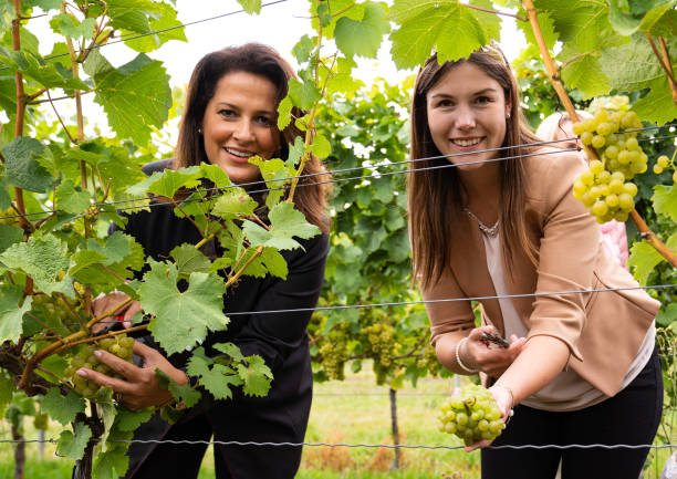 DEU: Opening Of The Franconian Grape Harvest