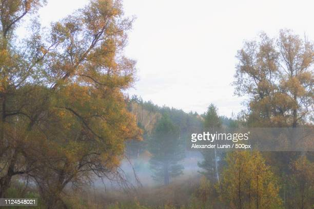 september morning in sibiria - lunin stock photos and pictures