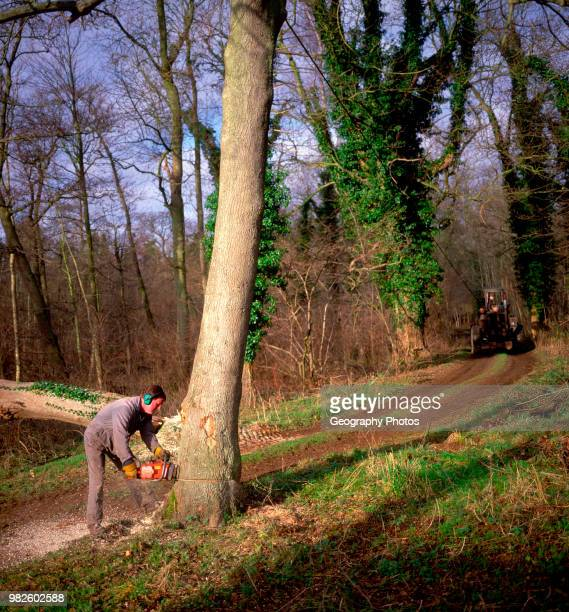 Sequence of nine Man cutting down an ash tree in English woodland