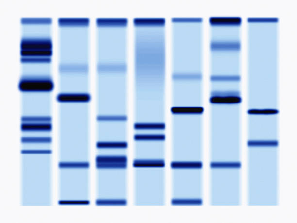 DNA Sequencing Gel, Close-up Wall Art