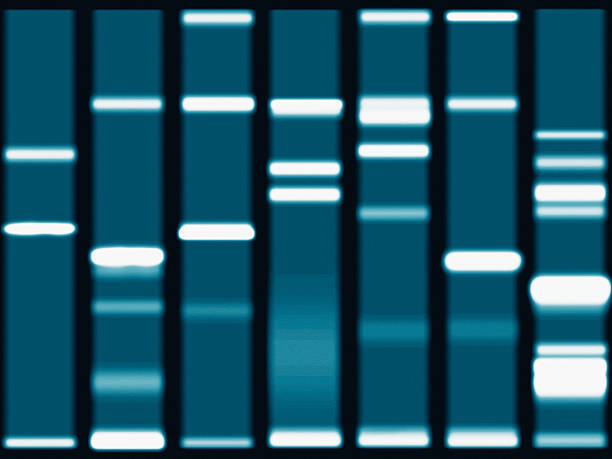 DNA sequencing gel, close-up