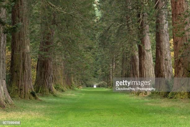 sequoia avenue - アベニュー ストックフォトと画像