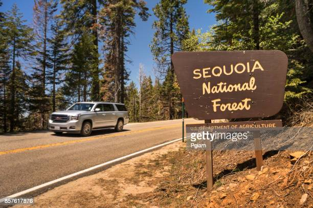 sequoia national forest in california usa - sequoia national forest stock photos and pictures