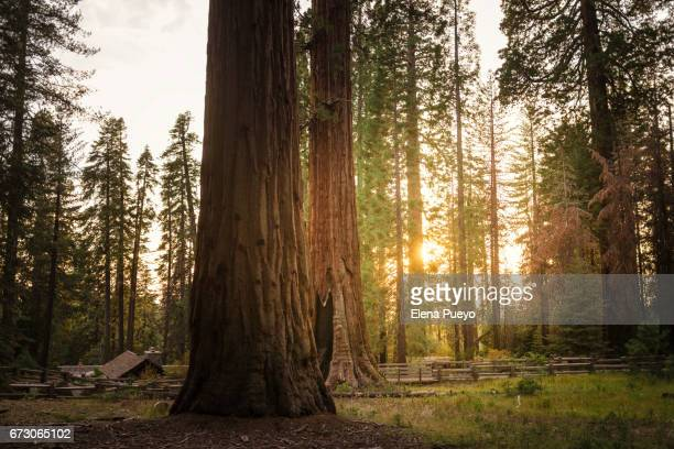 Sequoia National Park at sunset, California, USA