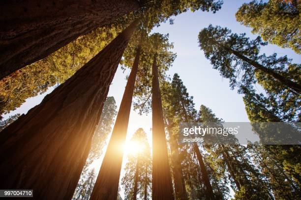 sequoia national park, california - 4k resolution stock pictures, royalty-free photos & images