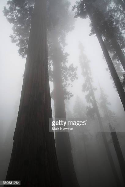 Sequoia National Park; California, United States Of America
