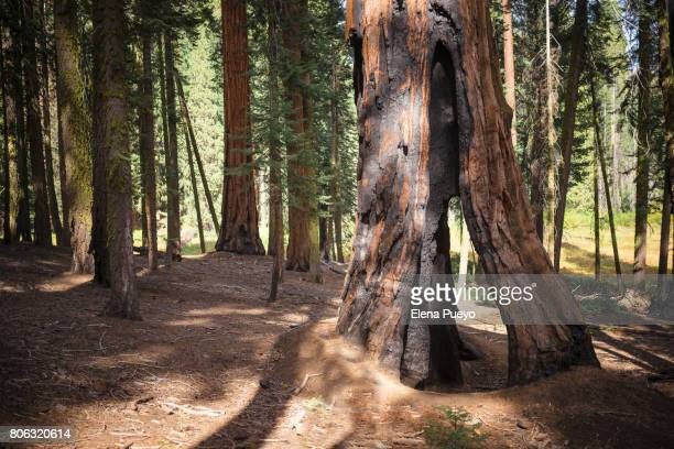 Sequoia National Park, California, USA