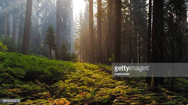 Sequoia National Park, Hume, California, Usa