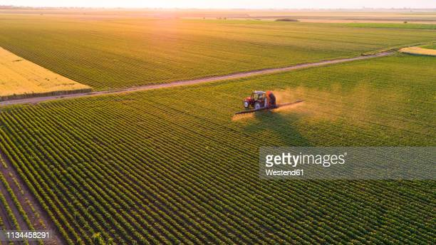 serbia, vojvodina, aerial view of a tractor spraying soybean crops - soybean stock pictures, royalty-free photos & images