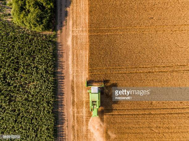 serbia, vojvodina. combine harvester on a field of wheat, aerial view - serbia stock pictures, royalty-free photos & images