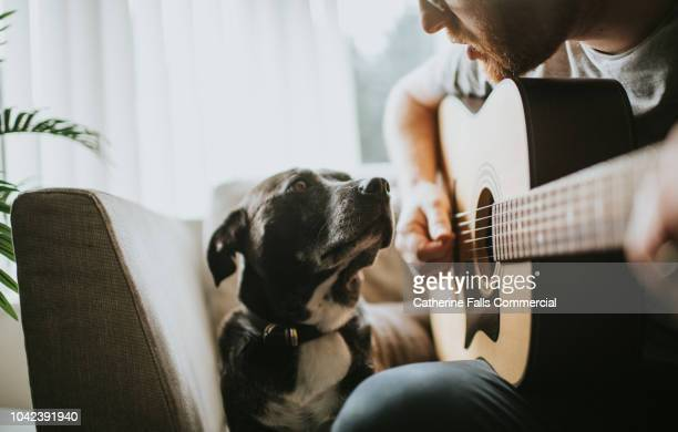 serenading - pets stock pictures, royalty-free photos & images