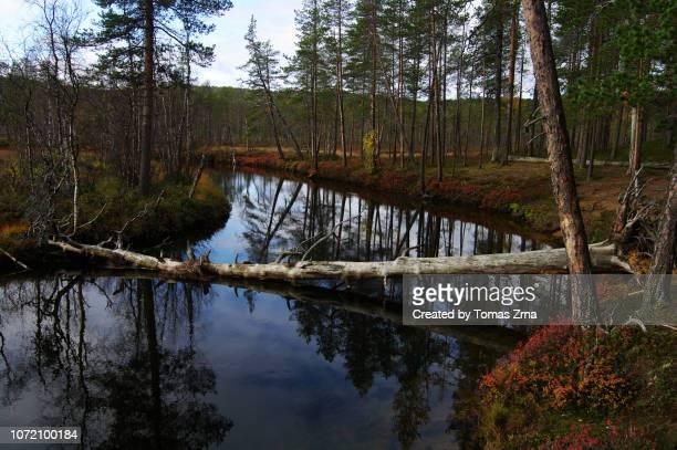 serene autumn scenery at the raja-jooseppi border between finland and russia - september stockfoto's en -beelden
