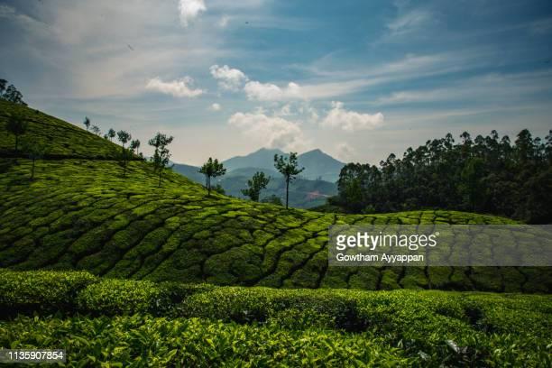 serene mountains of munnar - paisajes de india fotografías e imágenes de stock