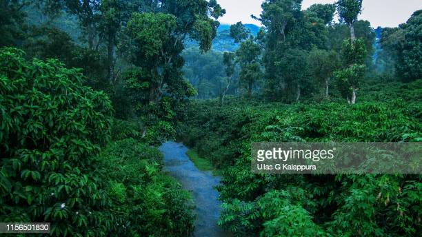 serene rainforest during monsoon season - monsoon stock pictures, royalty-free photos & images