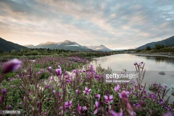serene river landscape in northern canada - norden stock-fotos und bilder