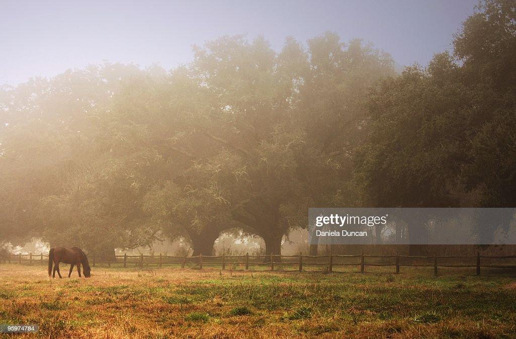 Serene scene : Stock-Foto