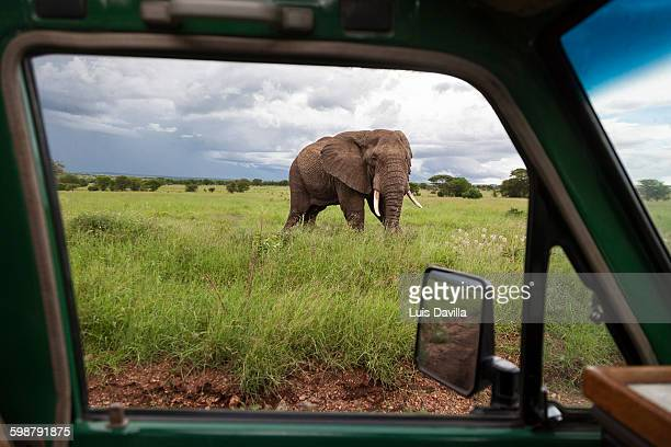 serengeti national park - safari stock pictures, royalty-free photos & images