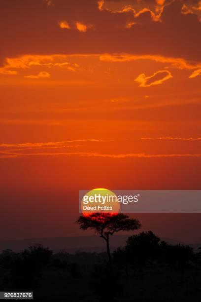 serengeti national park, tanzania - arusha national park stock photos and pictures