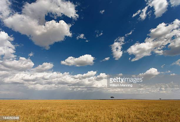 Serengeti plains, Masai mara National Reserve