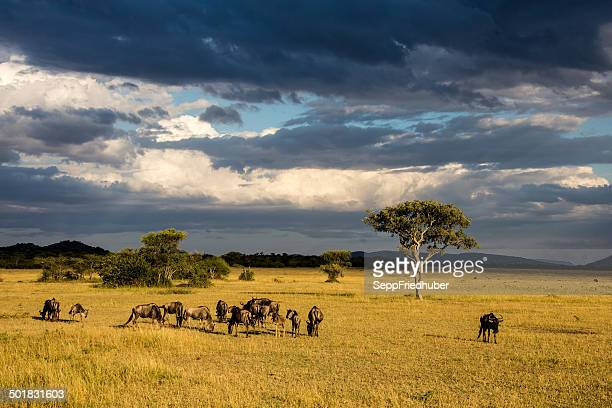 Serengeti plains with dramatic cloudscape