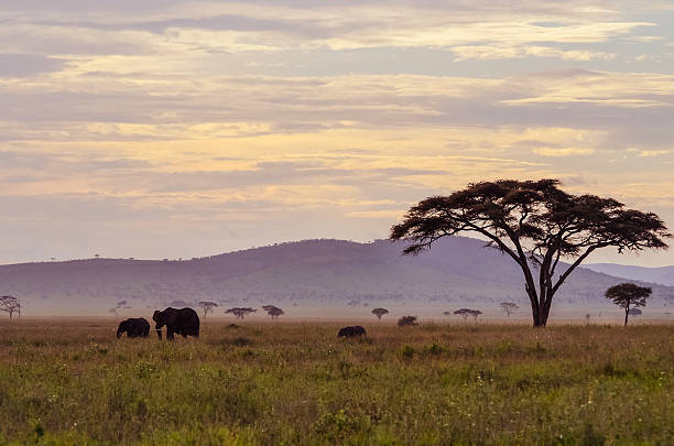 Serengeti purple landscape w/ elephants at sunset